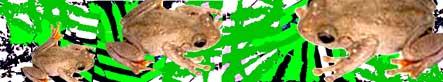 frog-header2